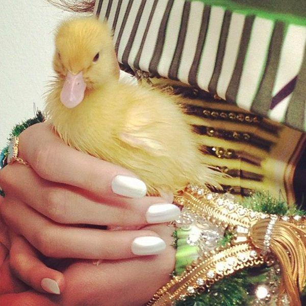 nick knight-cara delevigne-couture-duck